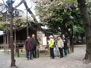 4.桜開花の標準木